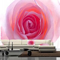 """Фото обои """"Красивая роза"""", Фактурная текстура (холст, иней, декоративная штукатурка)"""