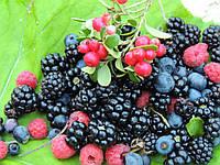 Жидкость для электронных сигарет 10 мл Со вкусом лесных ягод