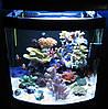 Resun GT-100  аквариум морской  100л