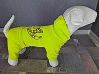 Велюровый костюм Dogs Bomba D-2 размер-4(S), фото 1