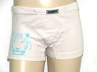 Детские трусы-шорты для мальчика ТИГР набор 2 шт.
