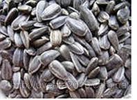 Семена подсолнечника «Ясон» ТОЛЬКО