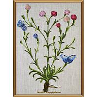 Набор для вышивания нитками Нова Слобода ЕМ-4021 Ботаника. Гвоздика травянка