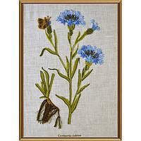 Набор для вышивания нитками Нова Слобода ЕМ-4020 Ботаника. Василек синий