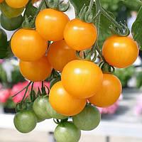 Желтый помидор. Семена