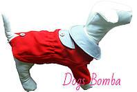Пальто Dogs Bomba КР-2 размер 6(M)