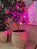 Фитопанель, лампа для растений, цитрусовых, орхидей 45W (2 спектра: синий/красный)
