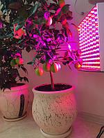 Фитопанель, лампа для растений, цитрусовых, орхидей 45W (2 спектра: синий/красный), фото 1