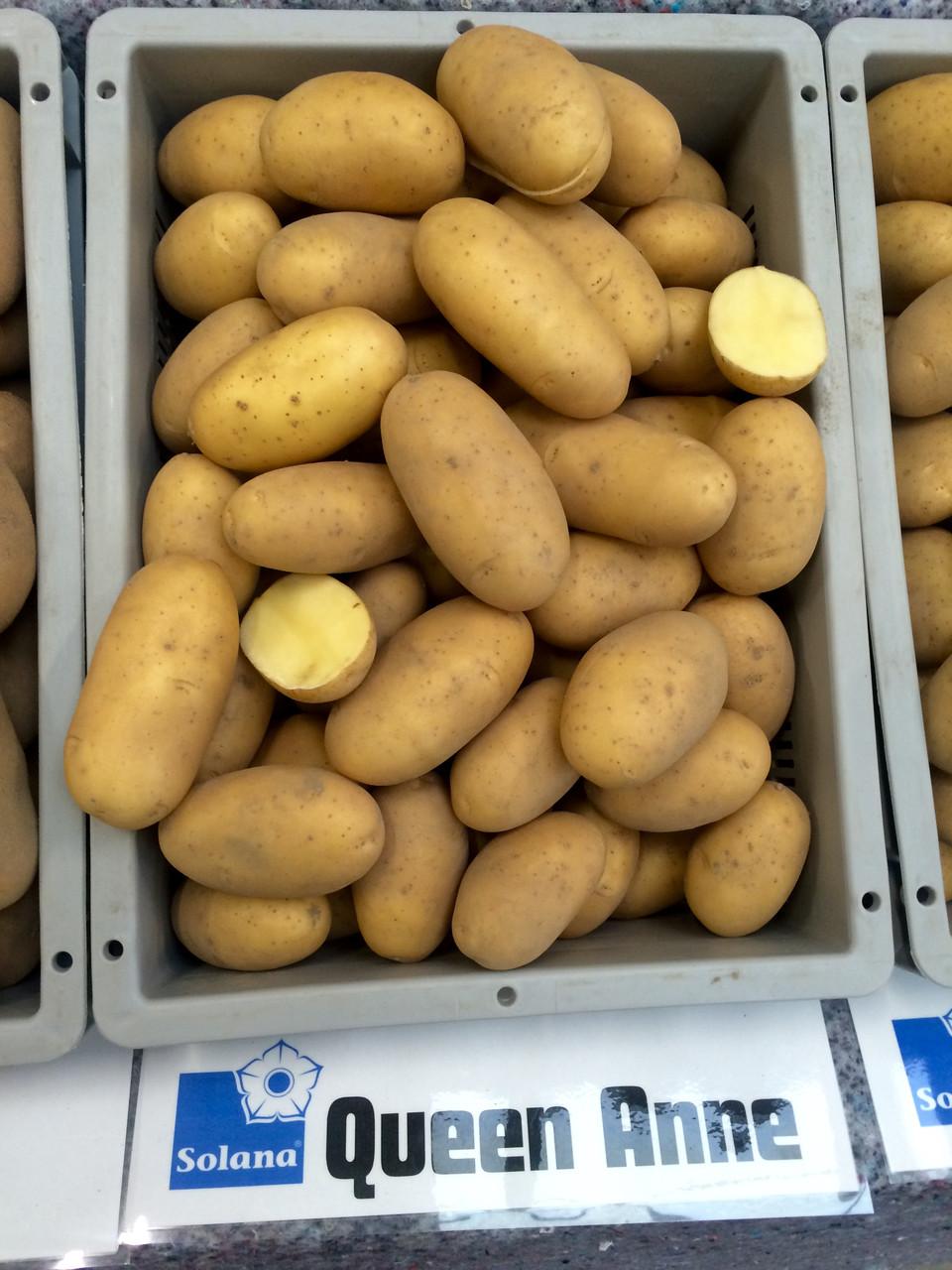 Картофель сорт лабелла фото