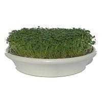 Проращиватель Eschenfelder для семян микрозелени, 21.5 см
