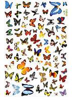Наклейка виниловая Бабочки 60 шт. 3D декор