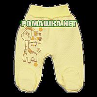 Ползунки (штаны) на широкой резинке р. 56 утолщенные ткань КАПИТОН 100% хлопок ТМ Алекс 3220 Желтый