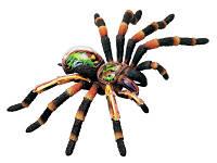 Анатомическая модель Паук тарантул, 4D Master (26112)