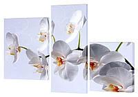 """Модульная картина """"Орхидея белая"""" 140x99 см"""