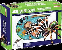 Объемная анатомическая модель 4D Master Паук тарантул (26112)
