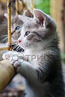 Инфракрасный плёночный обогреватель картина ТРИО Кот