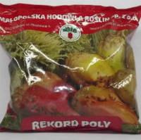Семена свеклы кормовой Рекорд Поли 1кг  (Польша)