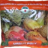 Семена свеклы кормовой Урсус Поли   1 кг (Польша)