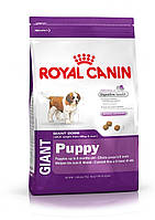 Royal Canin Giant Puppy 15кг -корм для щенков собак очень крупных размеров (вес взрослой собаки более 45 кг)