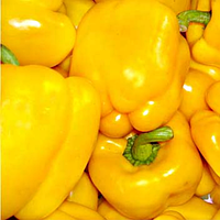 Семена перца сладкого Квадрато Асти Желтый 10 гр. Коуел