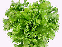 "Семена салат ""Латук"" большой пакет 5 г."