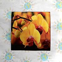 Наклейка на выключатель и розетку Орхидеи 2