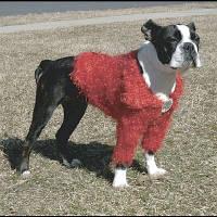 Doggyduds Shaggy Shrug кофточка одежда для собак XS