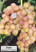 Вибірковий аналіз плодоношення сортів винограду в 2009р.