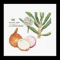 Набор для вышивки крестом 3042 Лук. Onion  (Теа Гувернер)