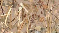 Пленка камуфляж (Заросли, сухой камыш) A020