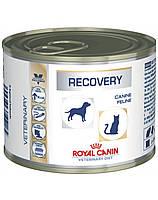 ROYAL CANIN Vet dog/cat recovery 195 g