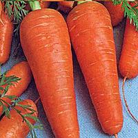 Семена моркови Шантане 500 г. Agri Saaten