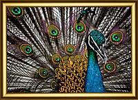 Набор картина стразами Crystal Art Павлин КС-1033