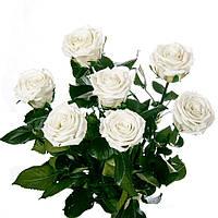 Букет из 5 роз Florich. Не вянут 5лет, 5/37.НАЛОЖКА!