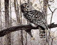 Картина раскраска Mariposa. Сова в зимнем лесу