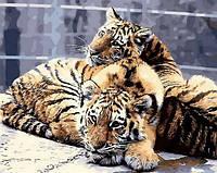 Картина раскраска. Задумчивые тигрята