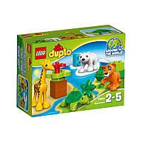 Конструктор Лего (Lego Duplo) Вокруг света: малыши животных