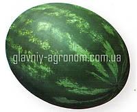 Семена арбуз Паладин Ф1 (1000 семян)