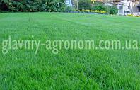Семена трава для газона придорожная (25 кг упаковка)