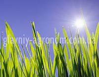 Семена трава для газона быстрорастущая (25 кг упаковка)