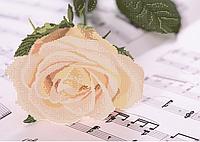 Схема для вышивания бисером Роза на нотной тетради КМР 3143
