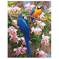 Набор для рисования по номерам Попугаи в орхидеях G 355