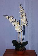 Орхидея двойн. бел. с корн(в 0.80м)