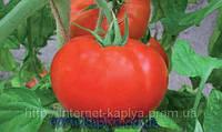 Семена томата Полонез F1 5 гр.Бейо заден.