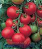 Семена томата Толстой F1 5гр. Бейо заден.