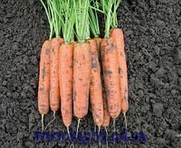 Семена моркови Балтимор F1 2,2-2,4 1 000 000 сем. Бейо заден.