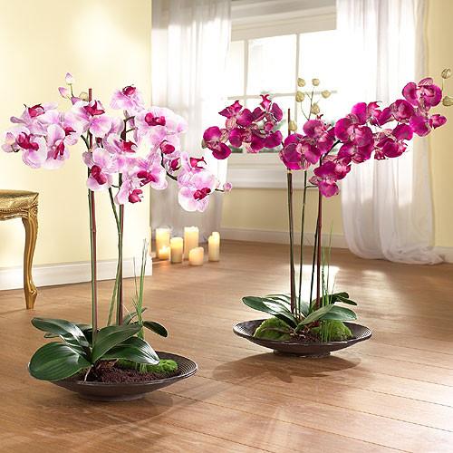 Орхидеи фаленопсис уход и в домашних условиях фото
