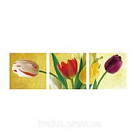 """MS 14055 ТРИПТИХ """"Разноцветные тюльпаны"""" Роспись по номерам на холсте 3х50*50см"""