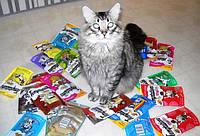 Консервы и паучи для котов