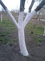Побелка деревьев в саду. Защита садовых деревьев. Уход за садом.